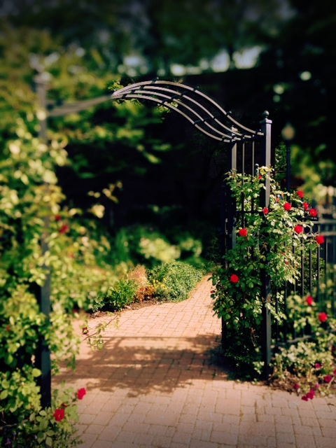 Rose Arbor at City Park