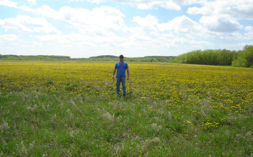"Who says dandelion is just a  ""cosmetic"" weed? Dandelion is in fact a serious agricultural concern and can cause significant production loss in hayfields/forage crops. Grant in a hay meadow in R.M. of Lorne (May 2006)"