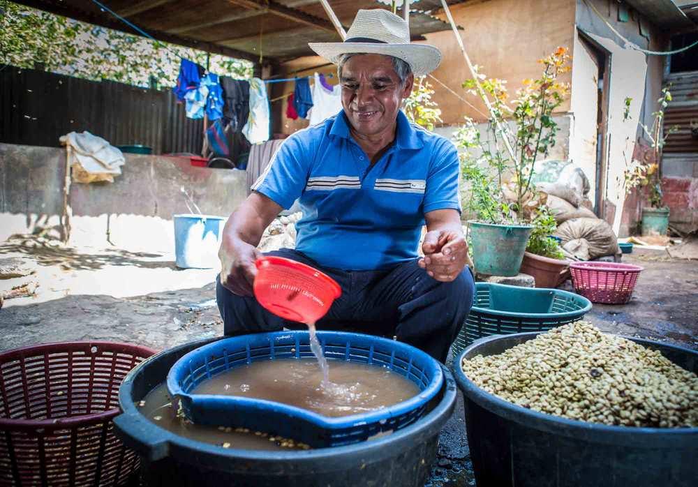 Miguel-washing-coffee.jpg