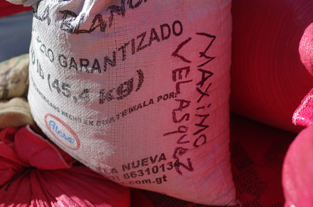 Parchment coffee from farmer Maximo Velasquez. Each bag is separated by producer to maintain quality.