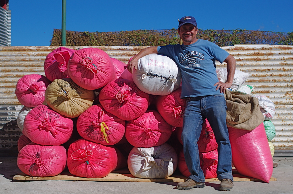 Head of the San Miguel cooperative, Timoteo, is ready to process the parchment coffee from La Suiza.