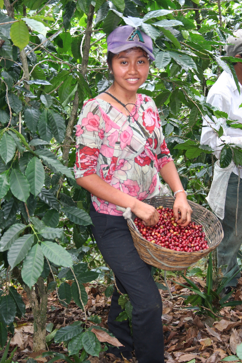 Woman picking coffee 5.jpg