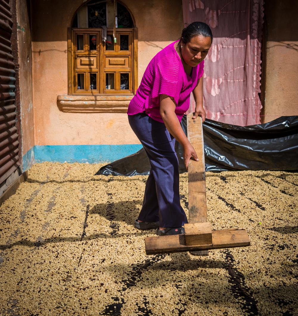 Virgilia raking coffee.jpg