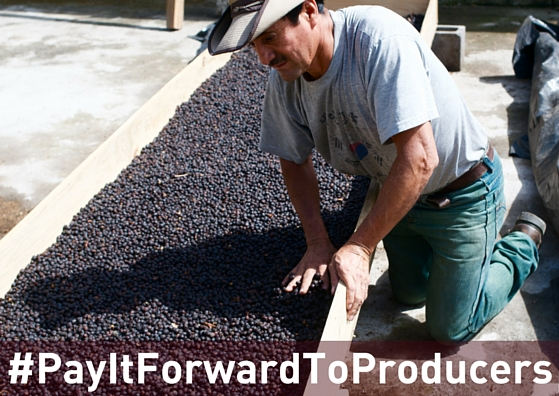 Timoteo, President of the San Miguel Escobar Cooperative attending to his natural processed coffee during the drying process.  Join our  #PayItForwardToProducersCampaign  and   donate $5 or $10   when you   buy a bag of coffee   support leaders from our 5 cooperatives to attend the  2016 National Coffee Congress  hosted by De la Gente and Anacafe where they will gain the knowledge and skills they need to grow sustainably and continue to produce specialty coffee.