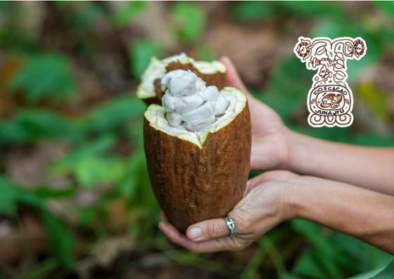 Cacao Junajpu.jpg