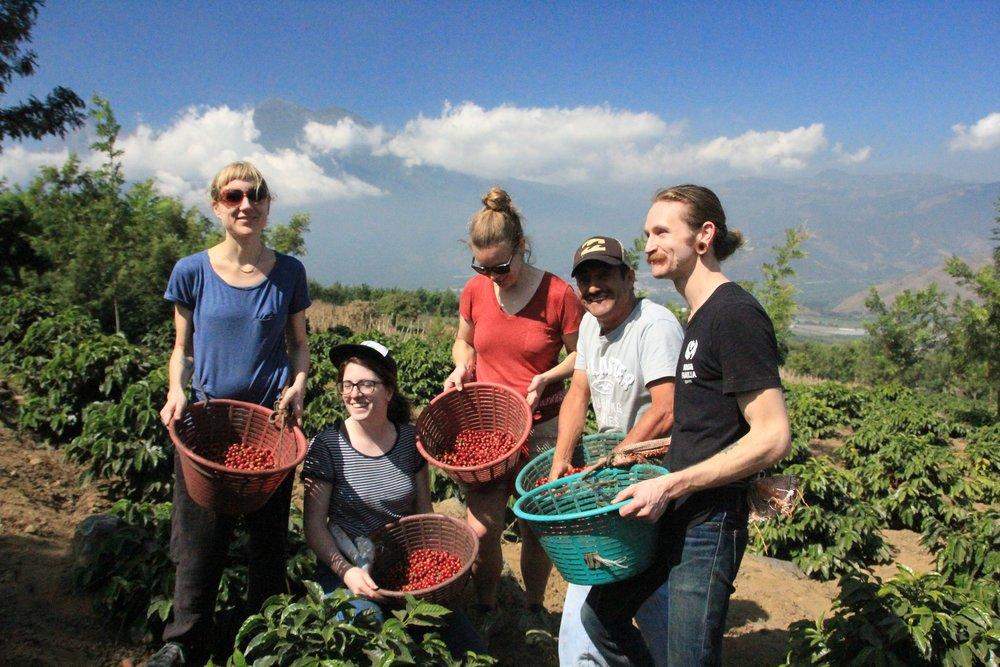 Green Coffee Guatemala