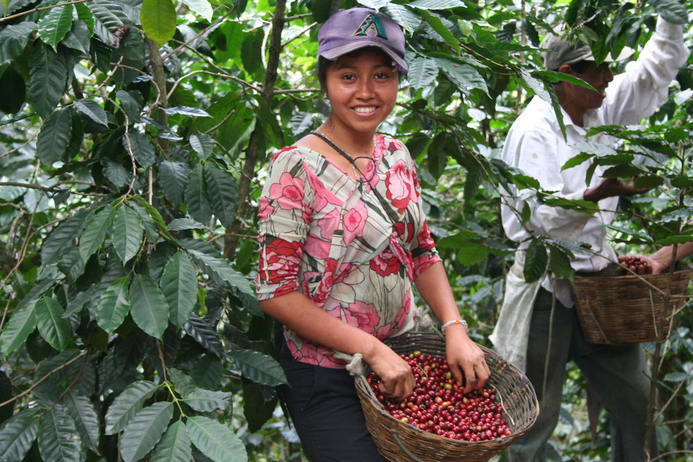 Woman picking coffee La Suiza.JPG