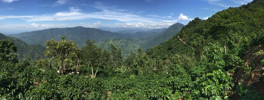 The view of Huehue from UPC's coffee fields