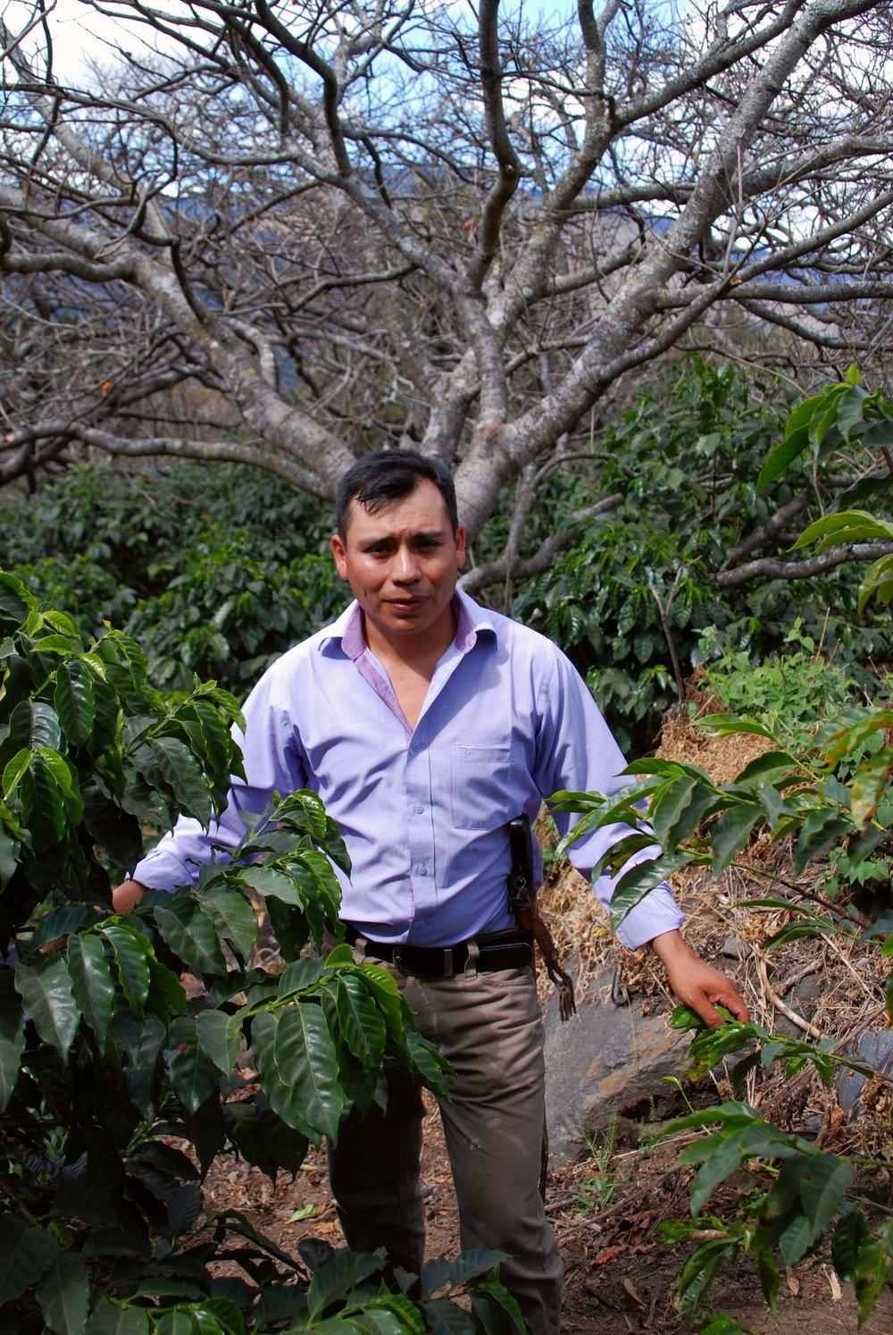 Coffee Microlot Guatemala
