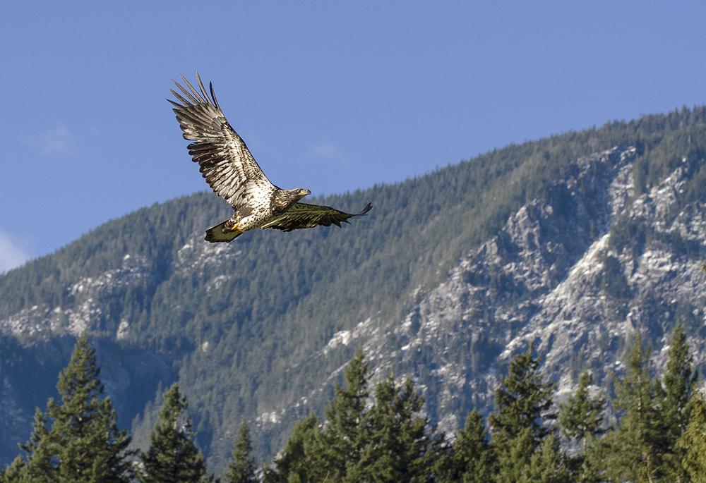 bc bald eagle workshop.jpg