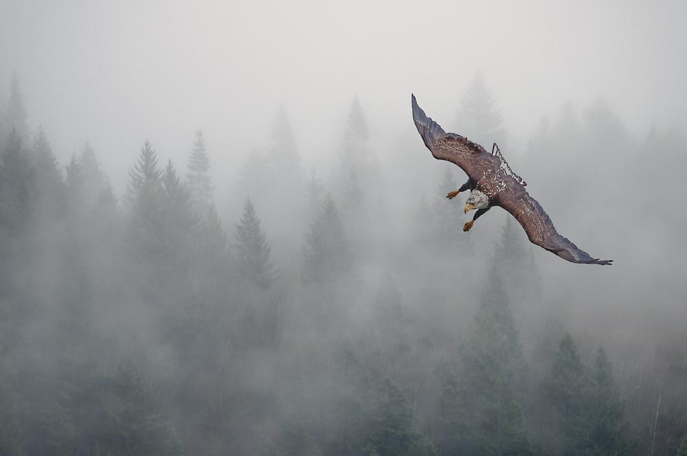 eagle in clouds.jpg