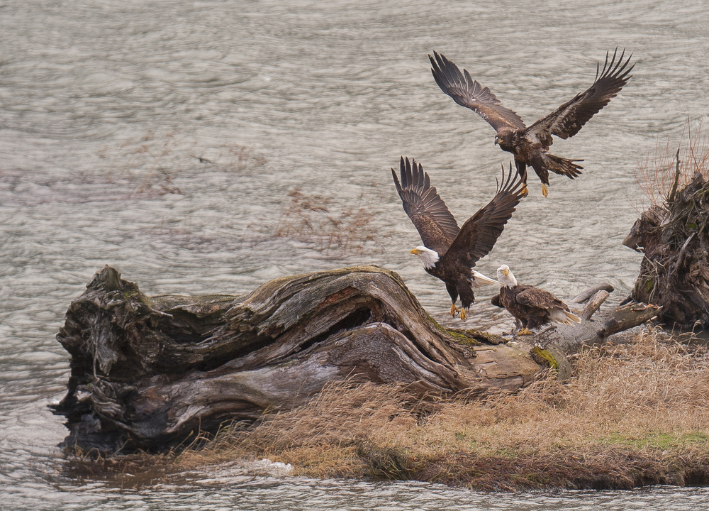 three eagles.jpg
