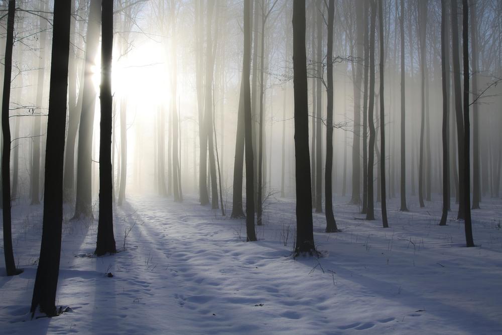 Winter fog.jpg