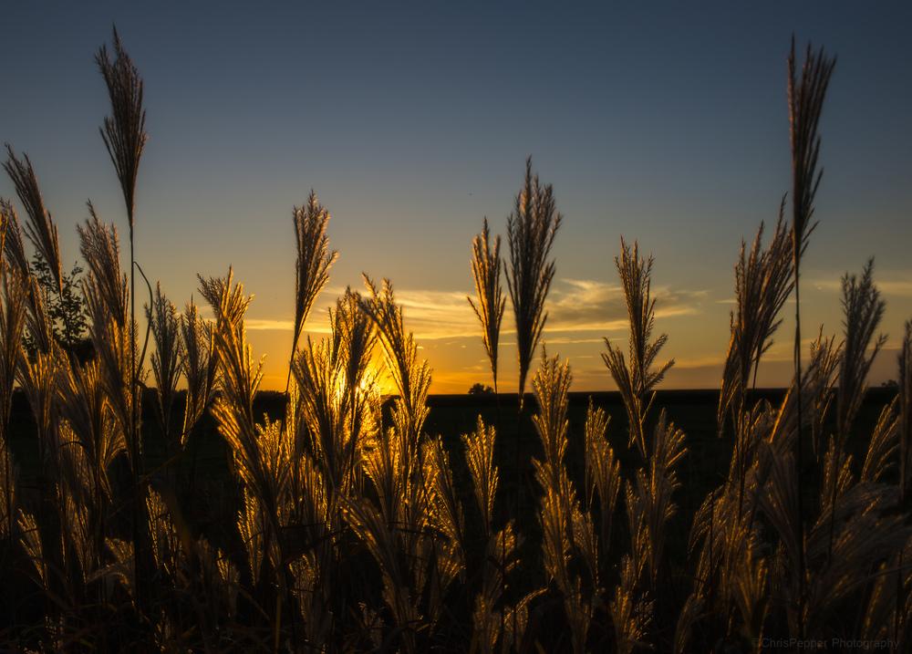 Fall Harvest.jpg