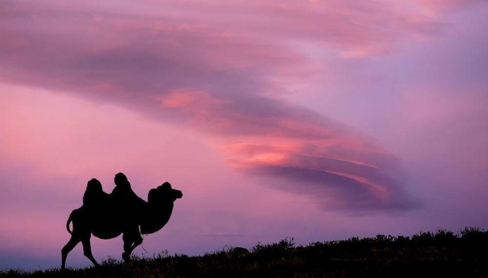 mongolia camel.jpg