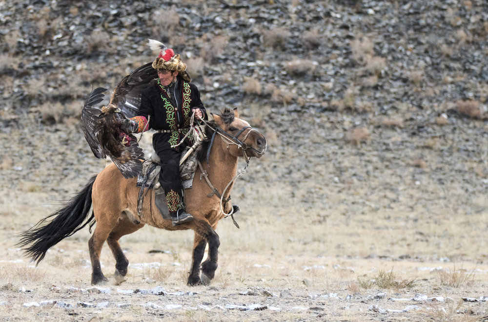 eagle landing on rider.jpg
