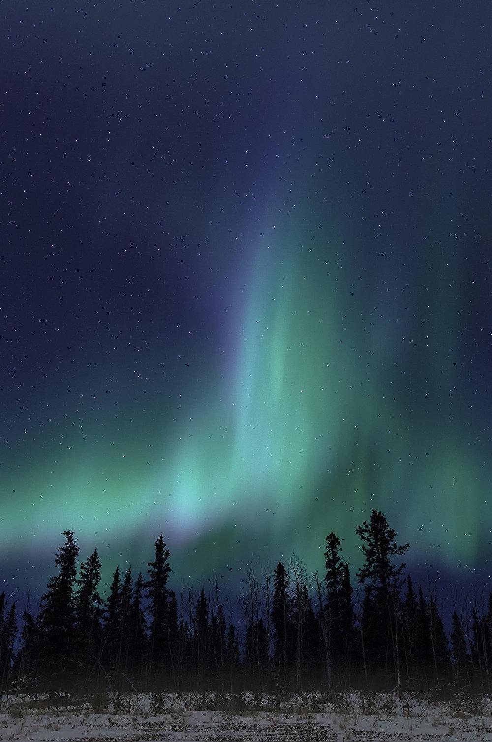 forest aurora.jpg