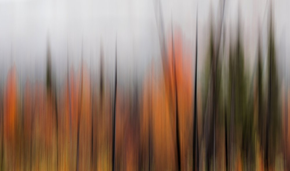 In camera motion blur as fall descends on the Yukon forests