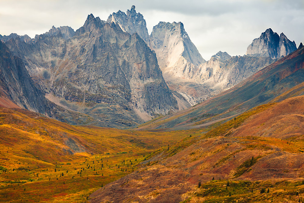Fall colours of the tundra lies in the foreground of the Tombstone Mountains