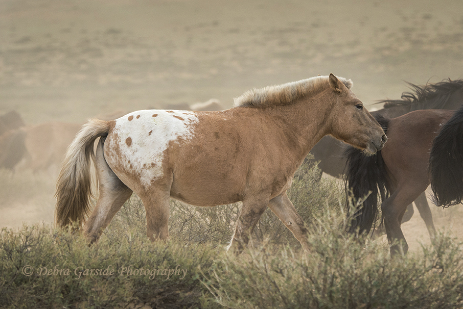 Spotted Horse in Mongolia[2].jpg