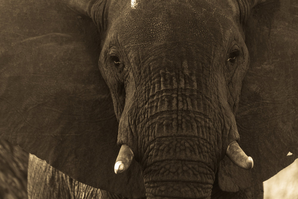 Africa-3934.jpg