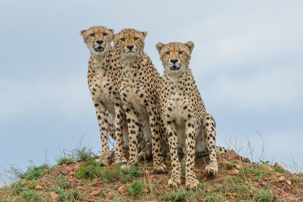 Africa-2663.jpg