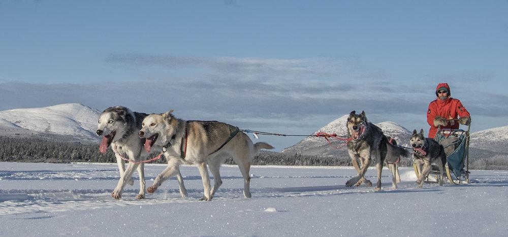 dog sled team.jpg