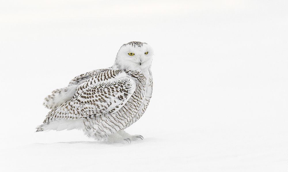 snowy portrait_sigma.jpg