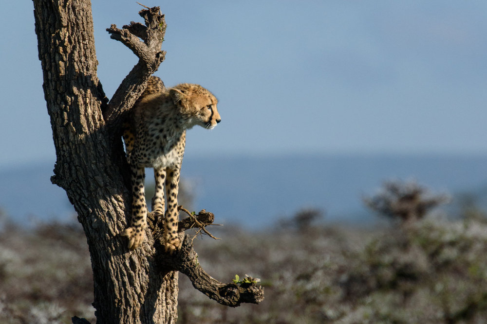 Tanzania Safari - March 28, 2019 to April 5, 2019