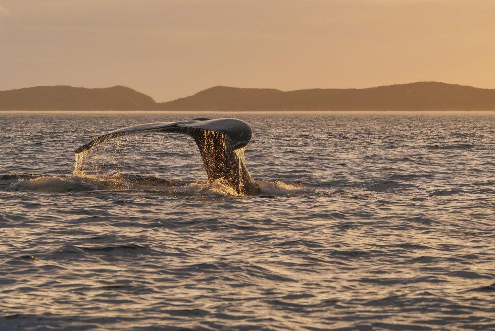sunset whale tail.jpg