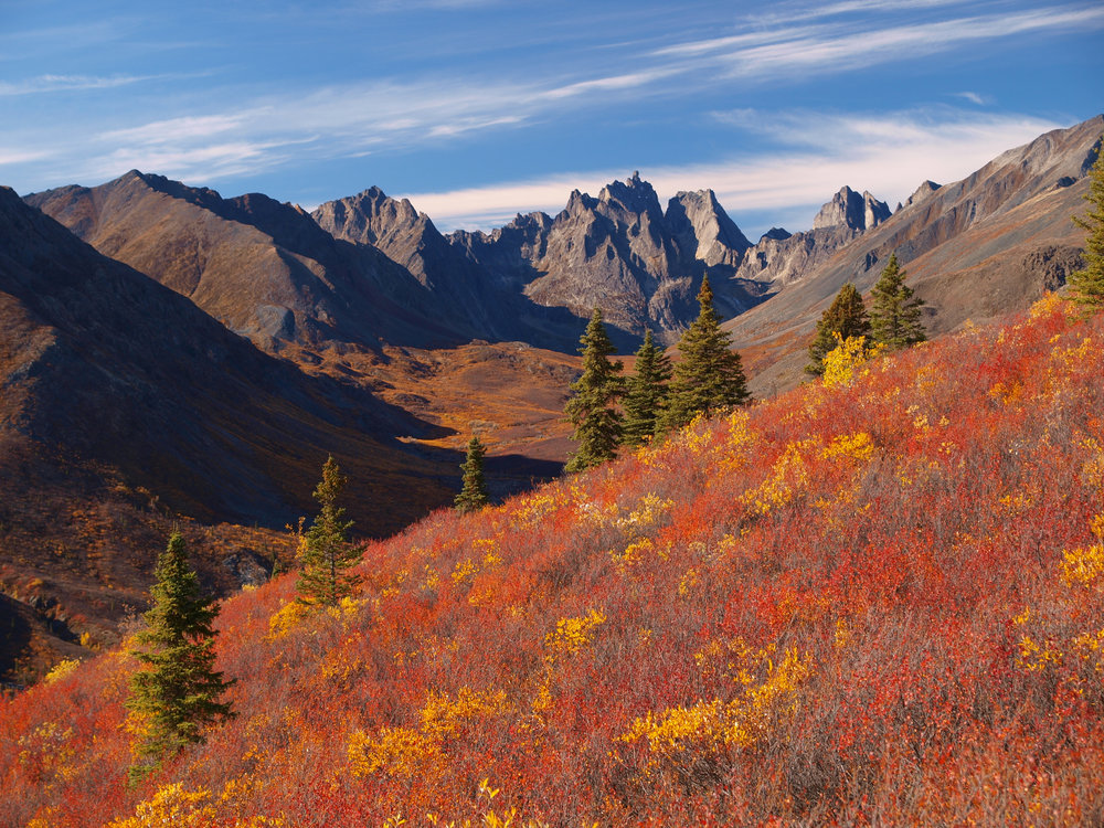 fall colours in tombstone.jpg