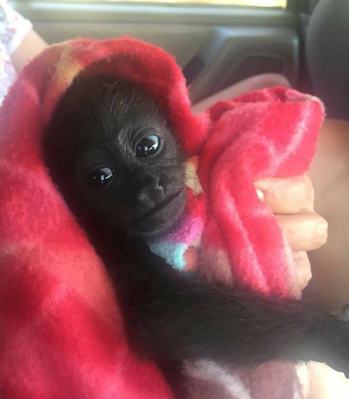 Orphan Luna on her way from the Animal Hospital to our Rescue Center