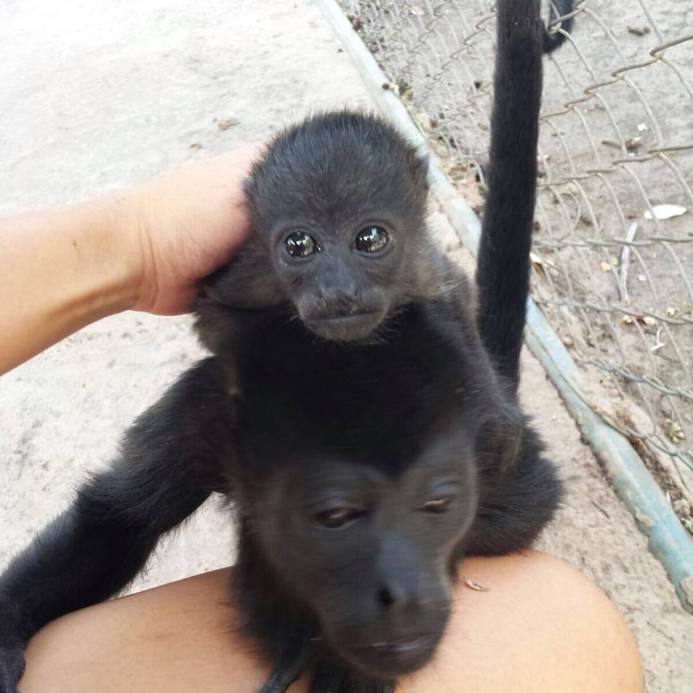 Baby Luna gets in touch with Cathrine, her potentially new monkey mother?