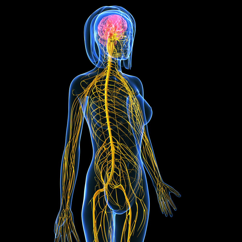 Nerves And Radicular Pain Ridiculous Pain Fairfield Osteopathic