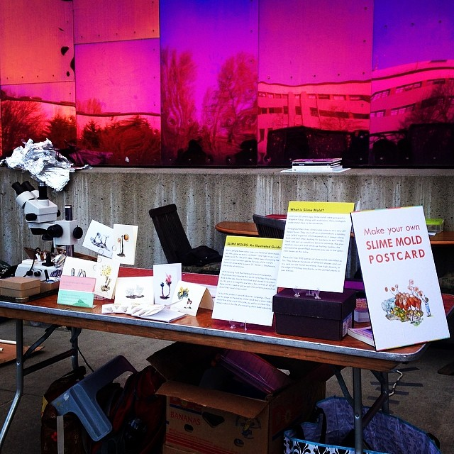 My booth, replete with specimens, magnifying devices, and explanations.