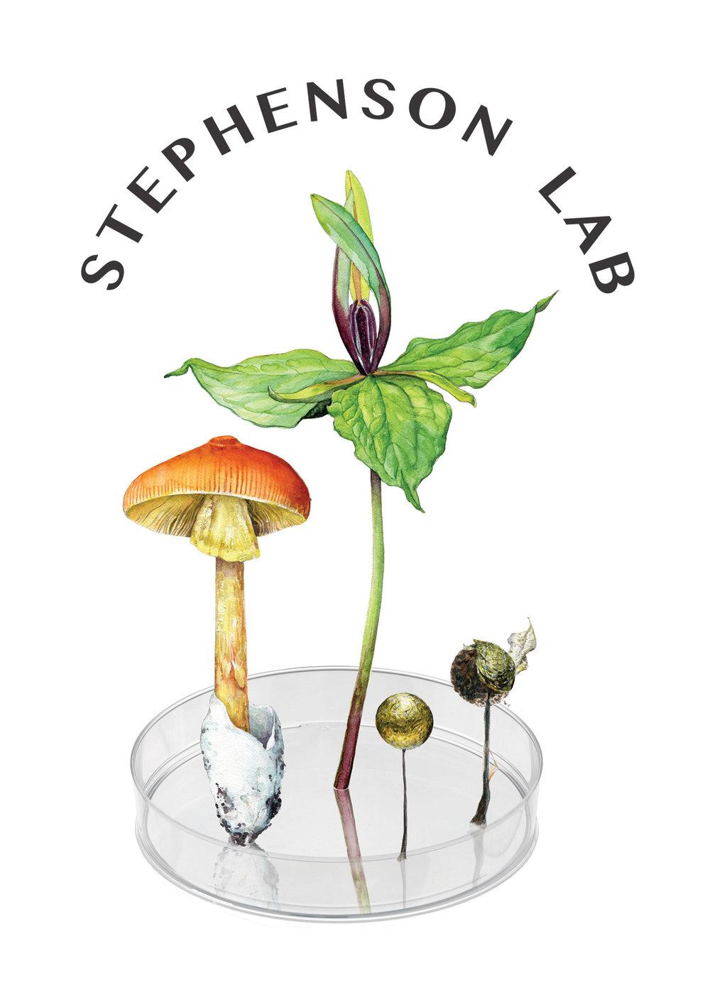 Stephenson lab