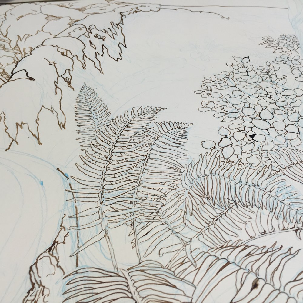 Then I drew on top of that non-photo blue stuff with brown walnut ink and a good old-fashioned nib pen (hence the splotches.) Walnut ink allows for some layering of darkness, and I used a quill-pen to achieve some organic variation in line weight as well as a classic natural history aesthetic.