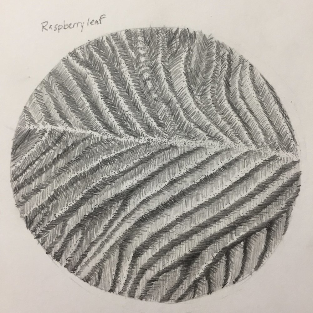 Raspberry leaf graphite texture exercise by Kelsy Flores