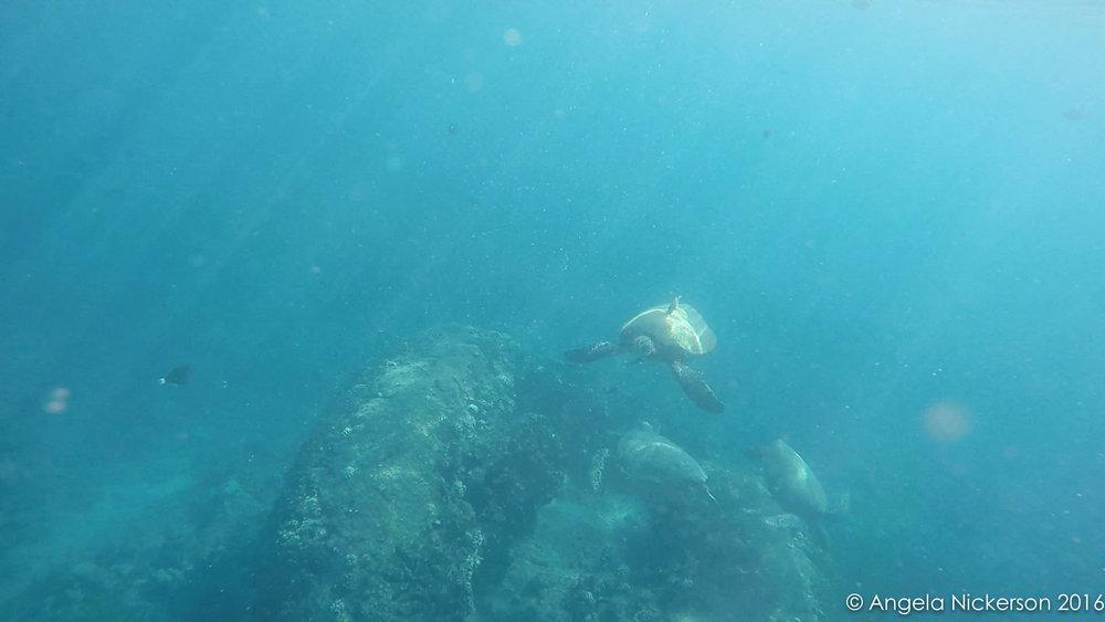20160420-turtle 2.jpg
