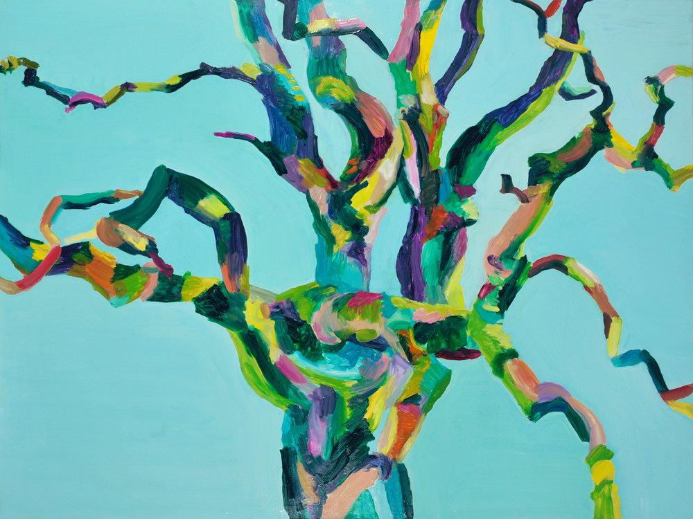 Old Man Elder Tree (Colourful Sausage Tree).jpg