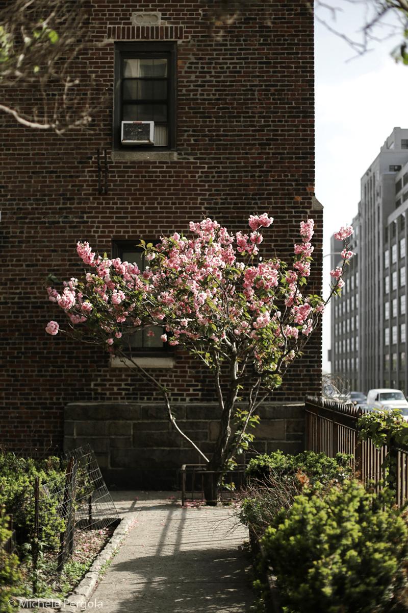 Brooklyn Heights, New York (2015)