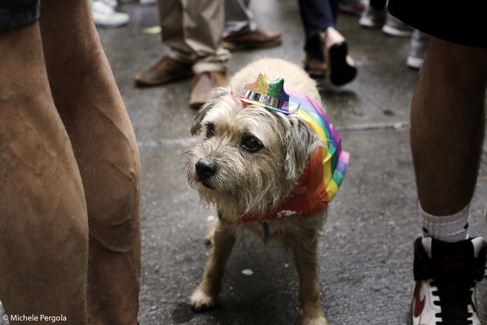 NYC Gay Parade 2015 - 04.jpg