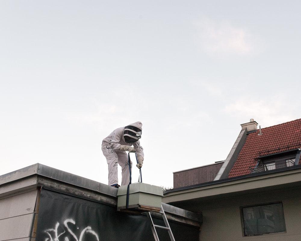 The urban beekeepers in Oslo Apiary & Aviary.   www.osloapiary.com