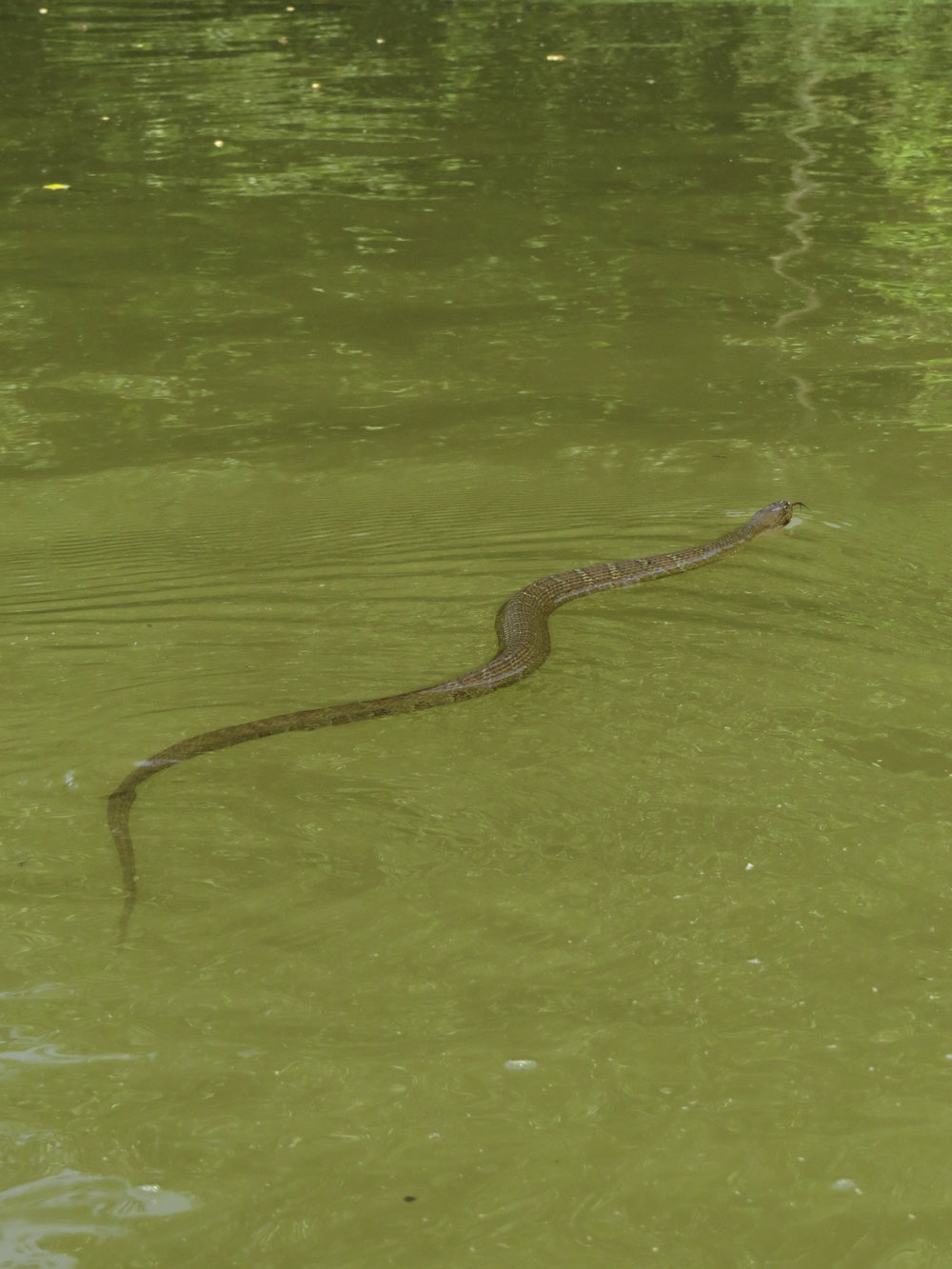 snake-kayaking-maryland-water-nature-outdoors-c&o-canal-potomac-river
