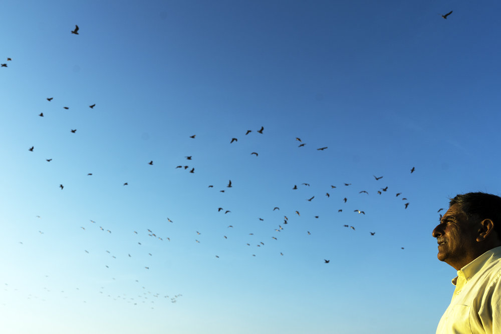 Julio Silva, Ubiavis. Región de Arica y Parinacota.  Ubiavis es un servicio que, mediante el uso de cámaras remotas, permite a cualquier persona del mundo la observación, vigilancia e investigación del Santuario de la Naturaleza del Humedal del Río Lluta, ubicado en Arica, Chile. Ubiavis nace con la idea de mostrar este humedal de forma remota y mediante cámaras, a los observadores de aves del mundo (80 millones). Pero pretende también que los observadores de otras latitudes puedan usar la cámara. La tecnología ya estaba; sólo se ha necesitado hacer los ajustes. El sueño de Ubiavis es que haya acceso gratuito de este servicio a cualquier interesado para cuidar la flora y fauna del planeta. Ojalá sea posible instalar algún día una Torre Ubiavis en la Antártica Chilena.
