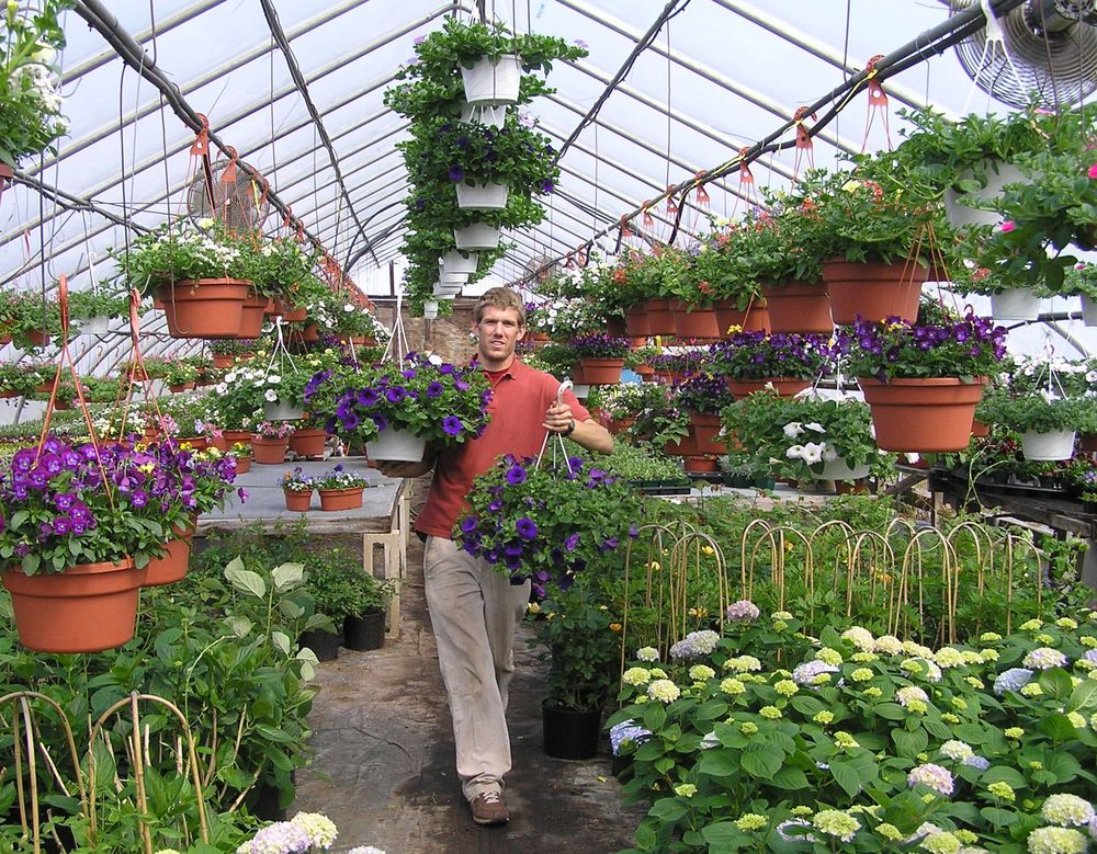 Josh getting a plant sale order together