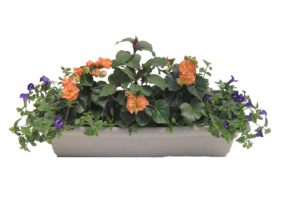 Apricot Window Box