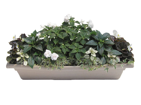 White Splash Window Box