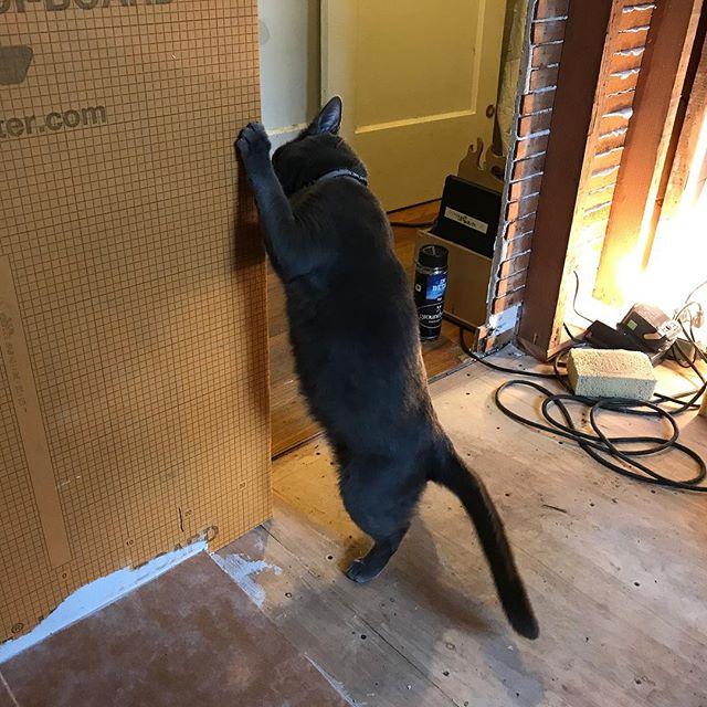 Getting inspected. #AnimalsOnJobsites #Schluter #Kerdibord #Kerdi