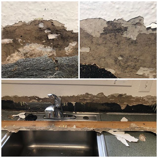 Starting a new kitchen remodel. Taking off the wood backsplash caulked onto drywall and there's mold hidden below the layers of paint. This is why I _always_ use Kerdi from countertop to cabinet. Use a waterproof membrane anywhere there's water.